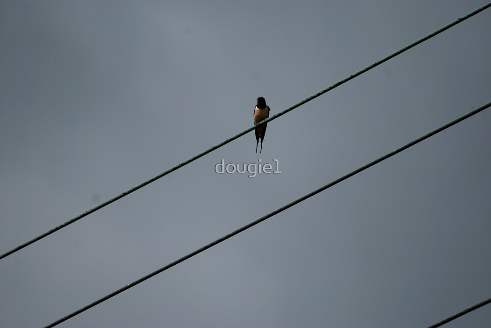 Bird On A Wire by dougie1