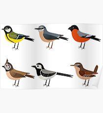 Illustration set of cute European bird cartoons Poster
