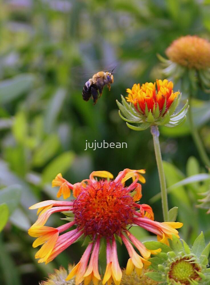 In Flight  by jujubean