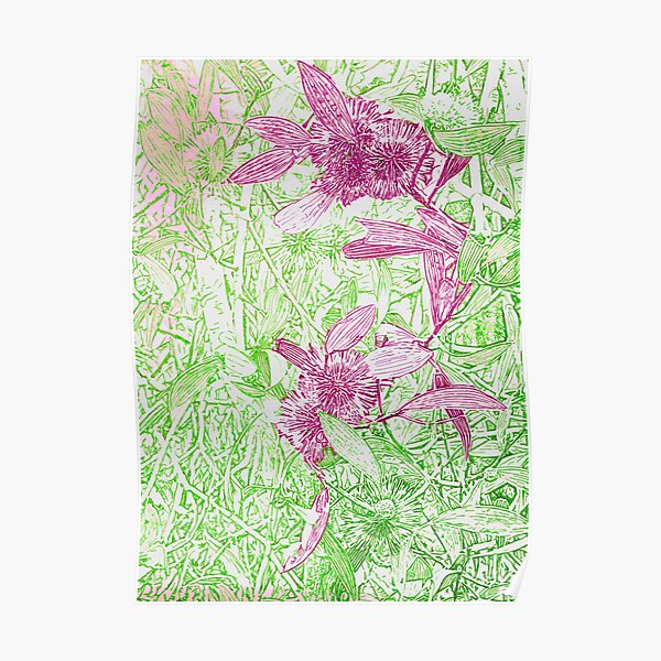Hakea, Pink and Green Poster
