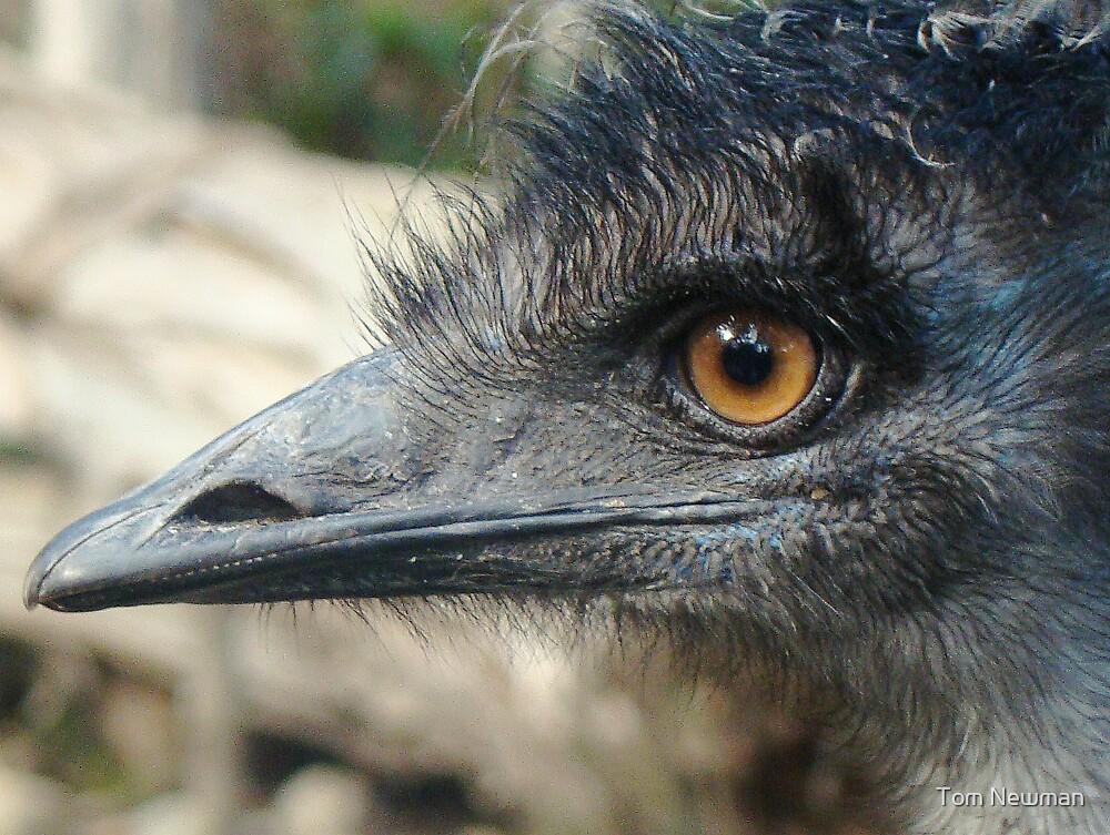 Emu I by Tom Newman