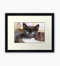 Black and white cat Framed Print