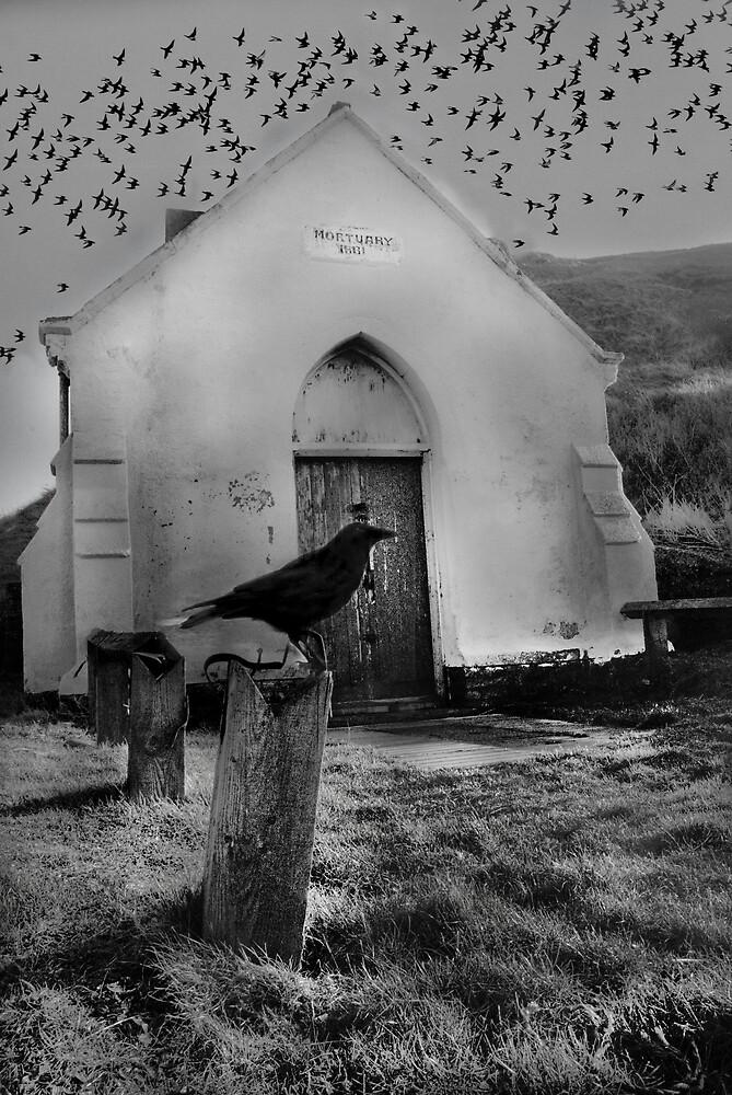 The BIRDS !! by WhartonWizard