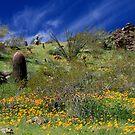 Desert Spring by Sue  Cullumber
