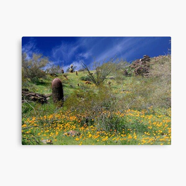 Desert Spring Metal Print