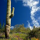Majestic Saguaro by Sue  Cullumber