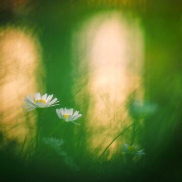 Lights of autumn by Blauer