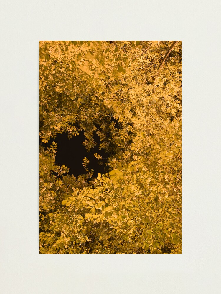 Alternate view of Golden Canopy Photographic Print