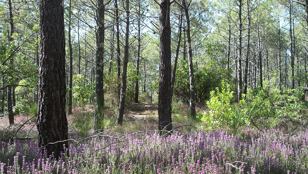 Forest in the Landes by daffodil