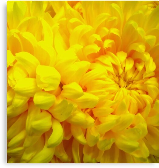 Yellow by JuliaWright