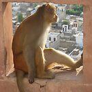 Monkey #3 by HelenBanham