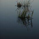 Zen on the Lake by Emma  Wertheim
