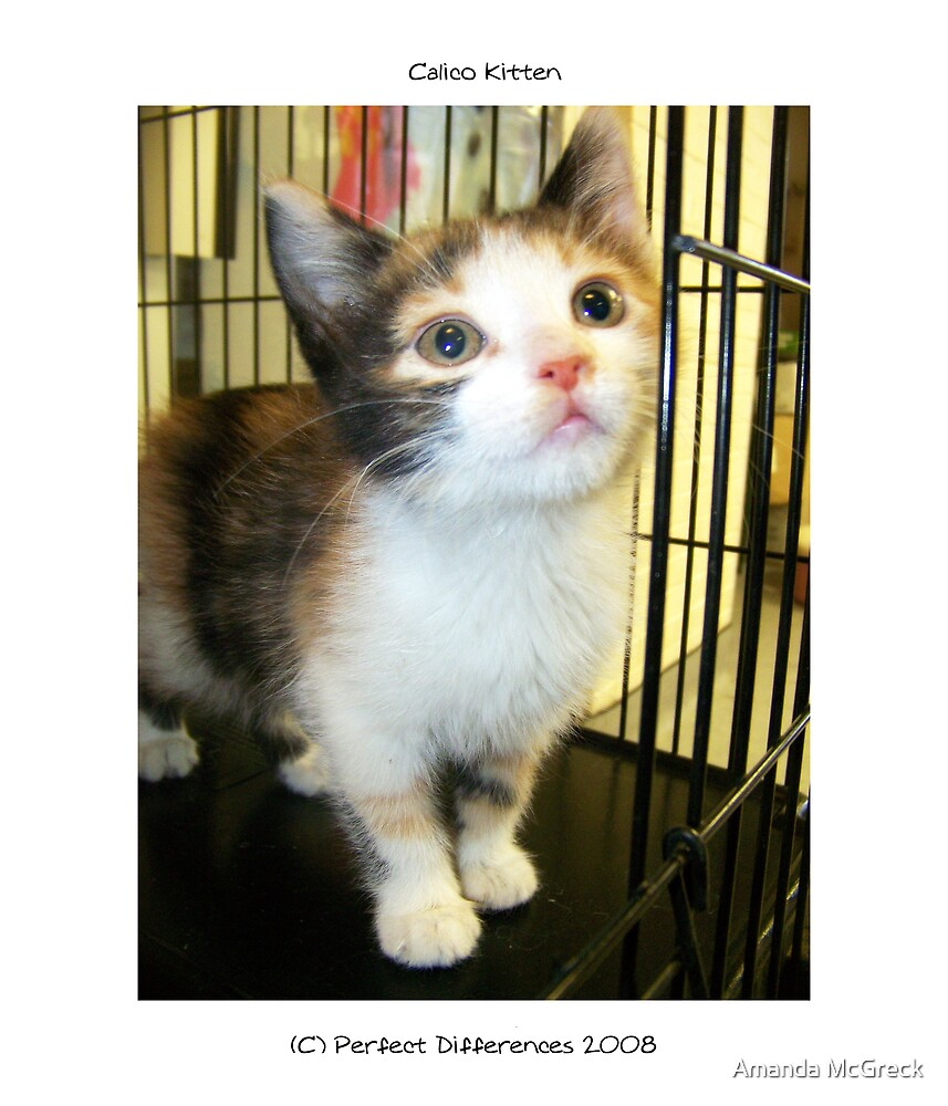 Calico Kitten by Amanda McGreck