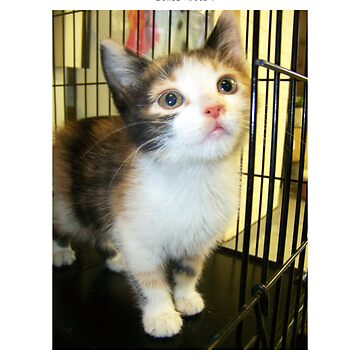 Calico Kitten by almcgreck