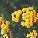 Infinit blossom von nurmut