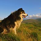 Border Collies Rule! by Michael Haslam