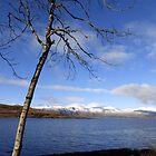 Loch Linnhe, Scotland by trish725