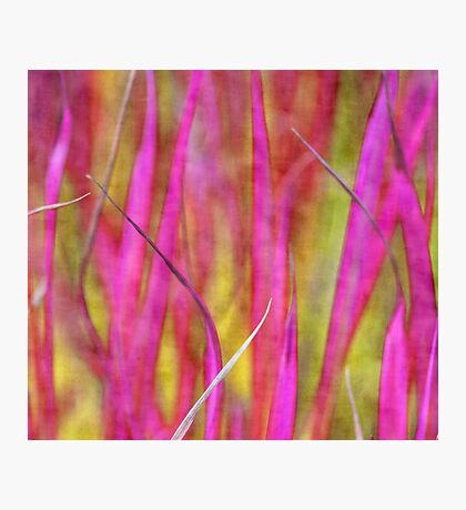Grass in pink Photographic Print