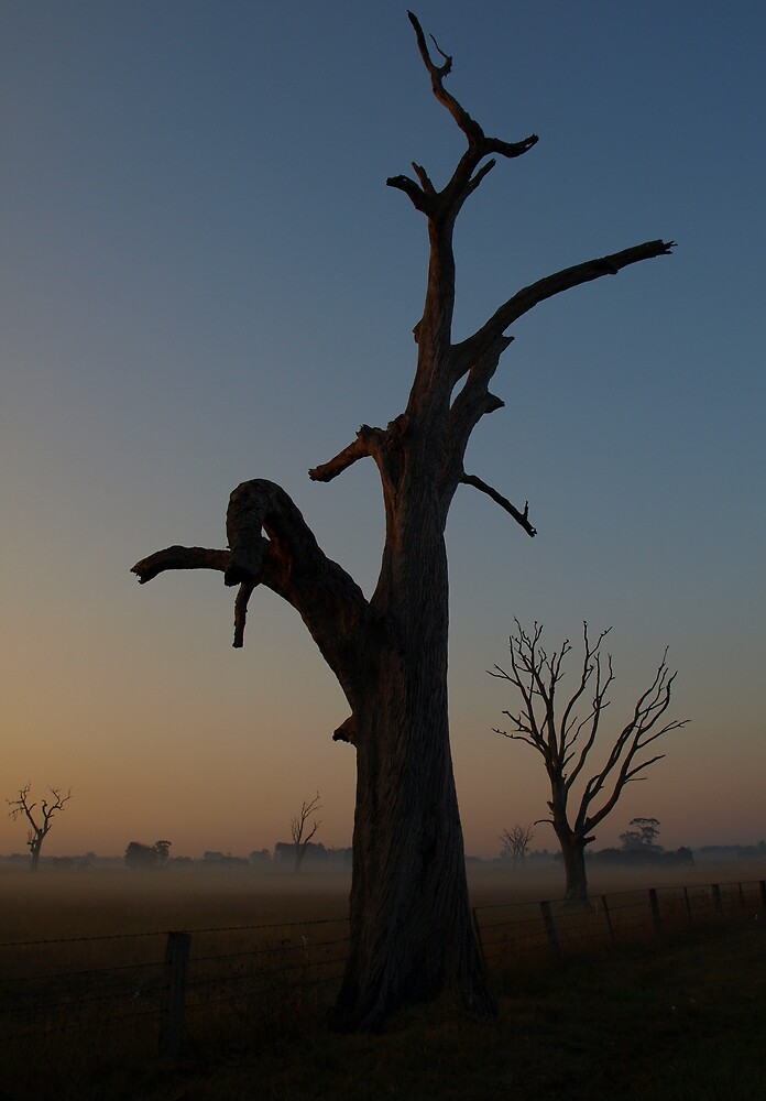 Naked Tree At Sunrise by Andrea Brown