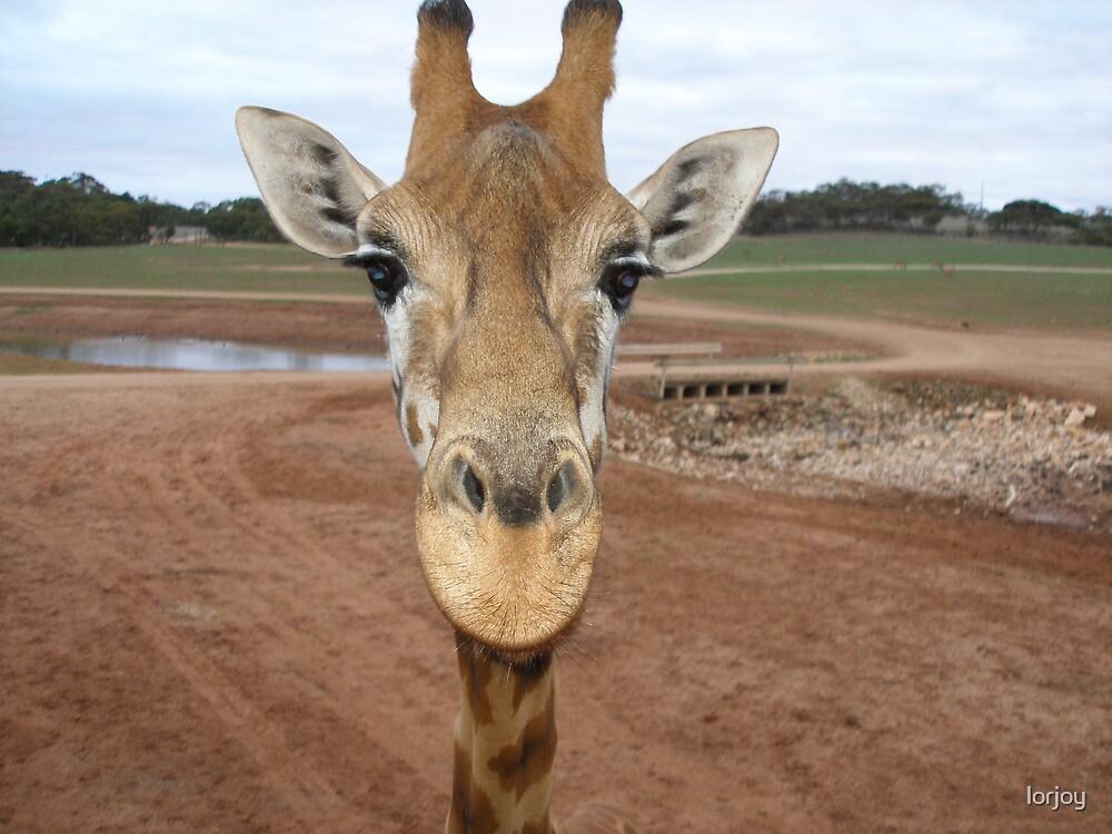 giraffe by lorjoy