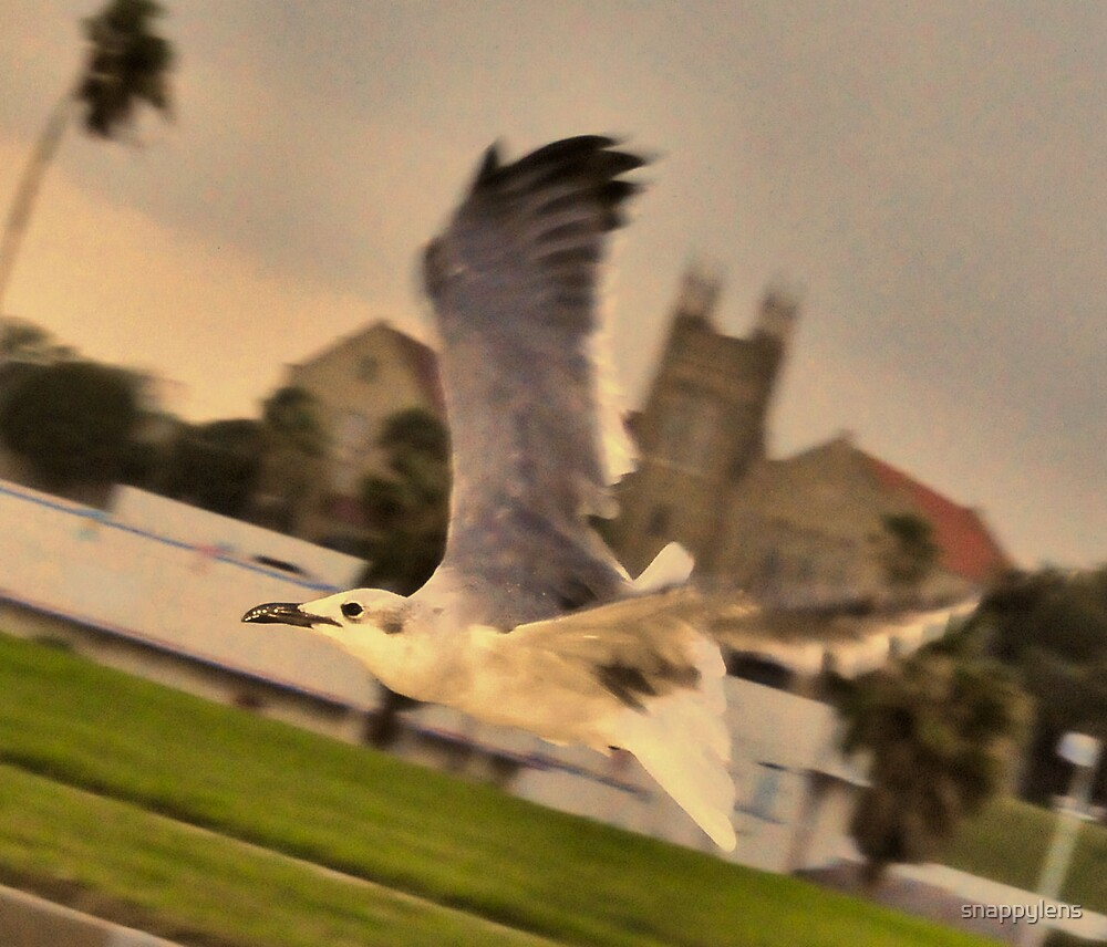 high speed bird by snappylens