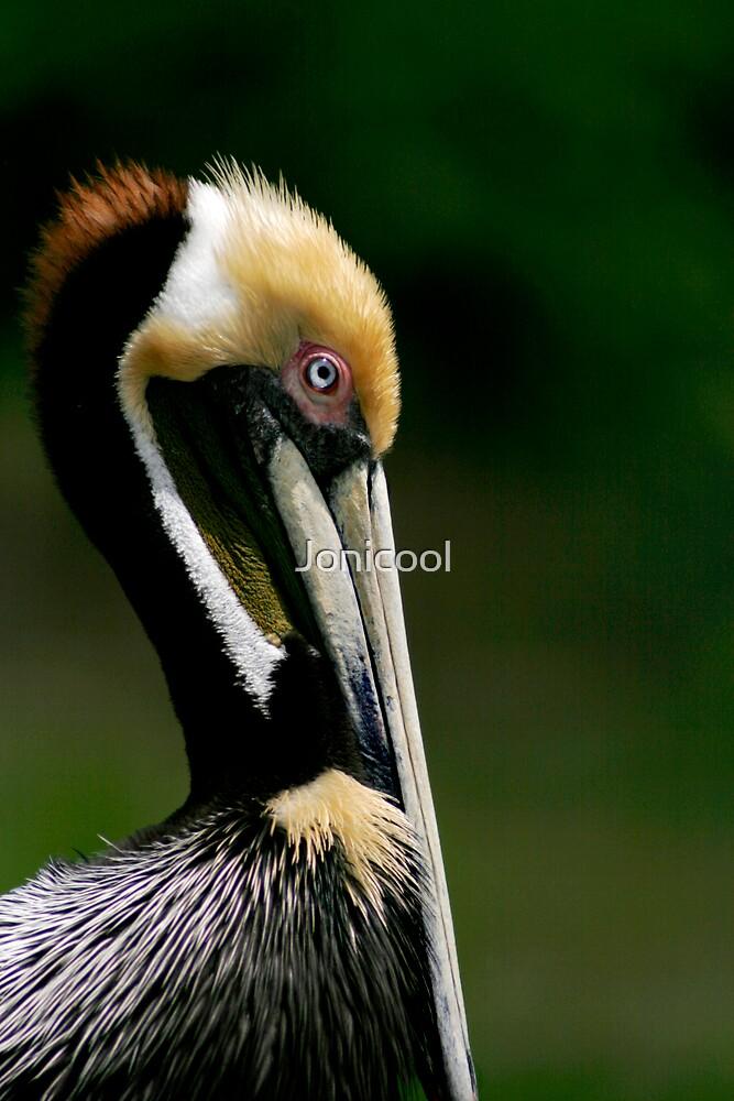 Pelican Profile by Jonicool