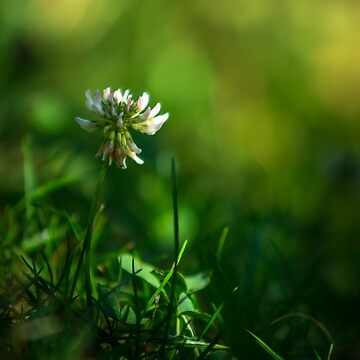 Small flower by Blauer
