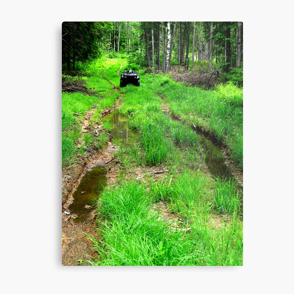 Showdown In The Forest Metal Print