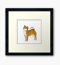 the dog Shiba Inu Framed Print