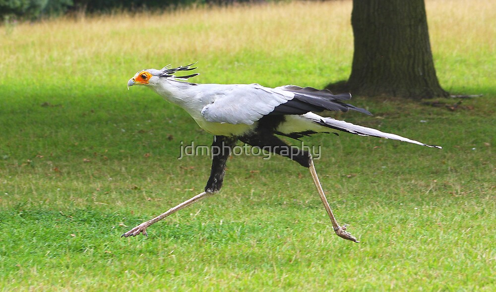 Secretary Bird by jdmphotography