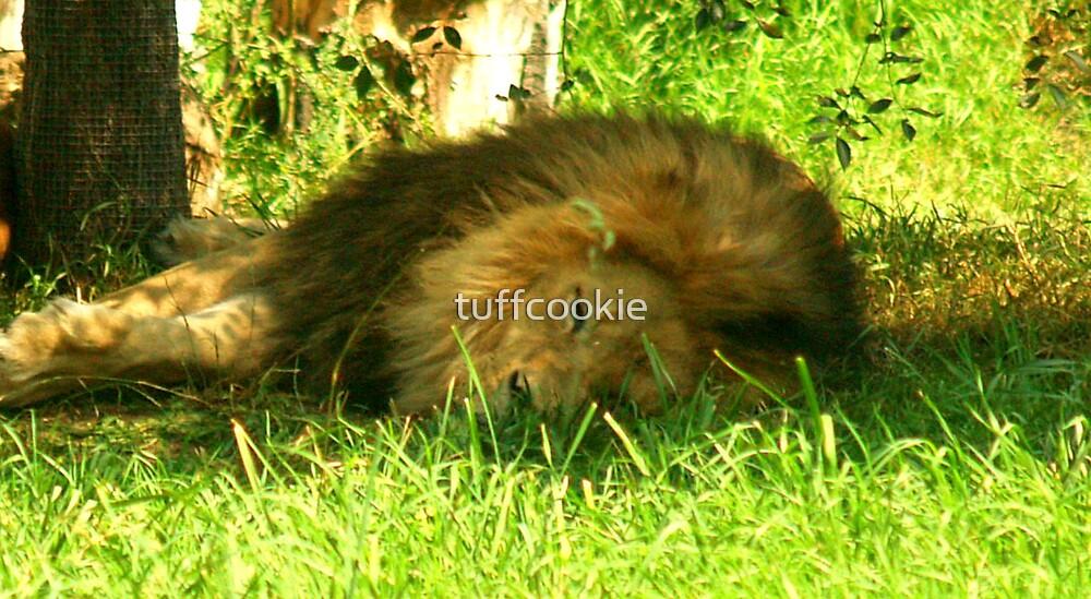 The Lion Sleeps  by tuffcookie