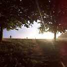 Phoenix Park - Dublin - Ireland by Tomasz-Olejnik