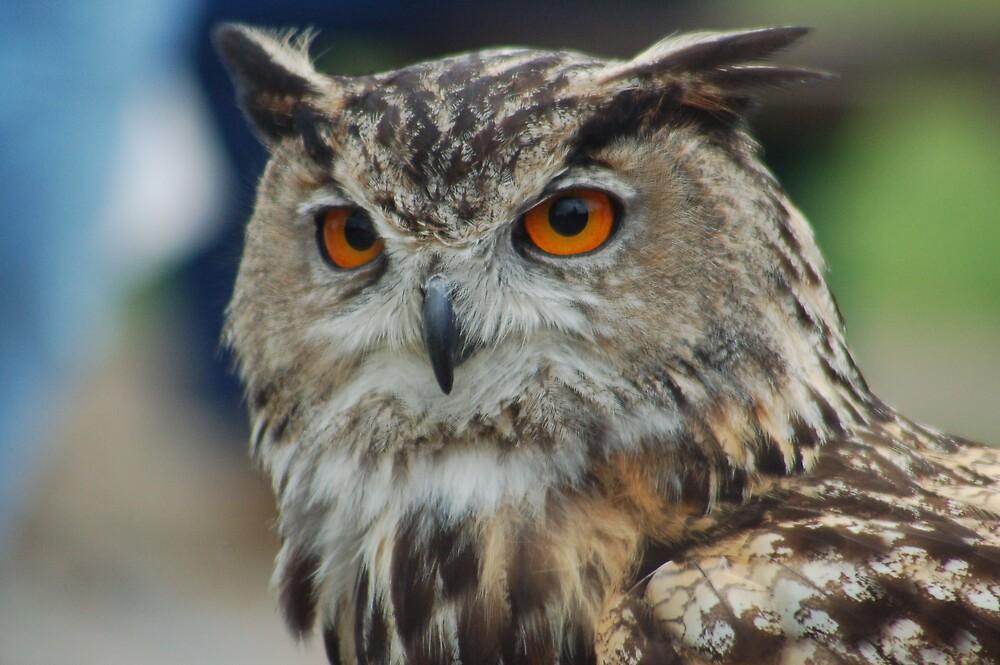 Europian Eagle owl by WhartonWizard