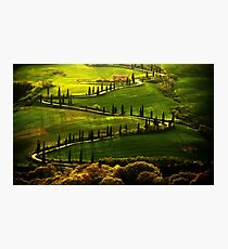 Cypresses Alley Photographic Print