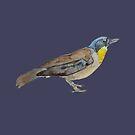 Watercolour bird by pokegirl93