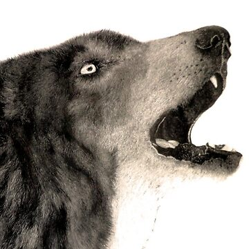 Wolf realism drawing  by DarrelLeigh