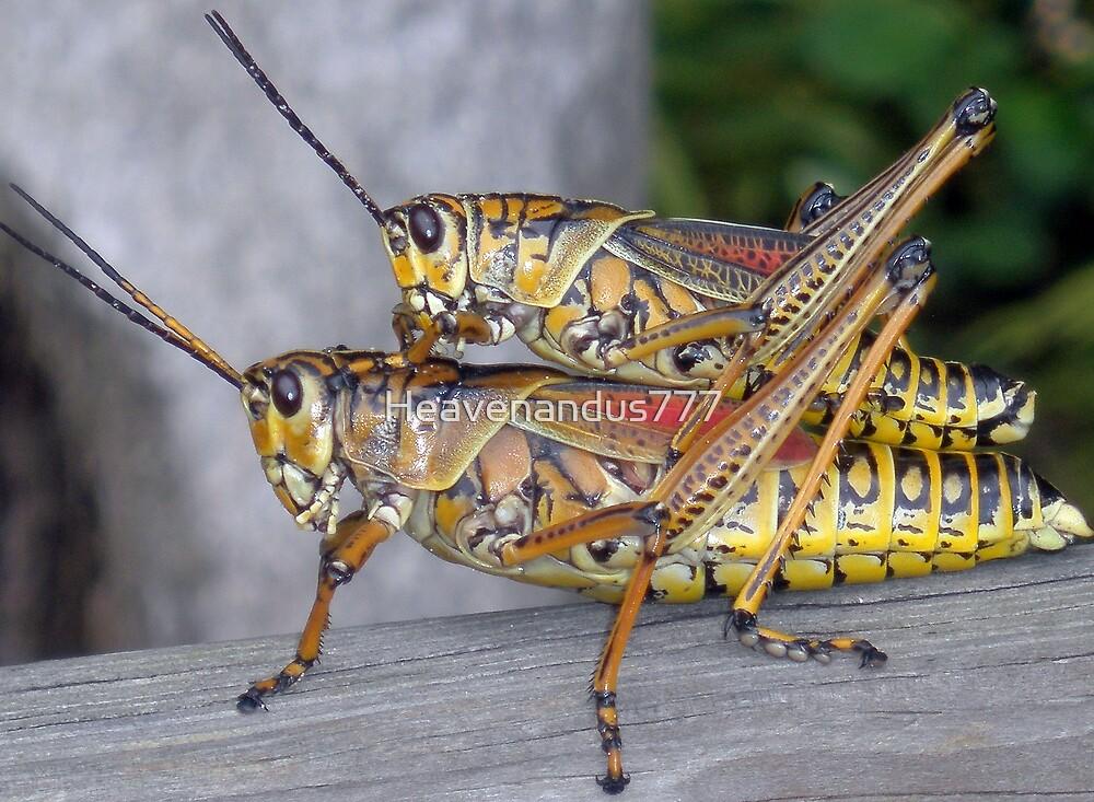 Mating Grasshopper #2 by Heavenandus777