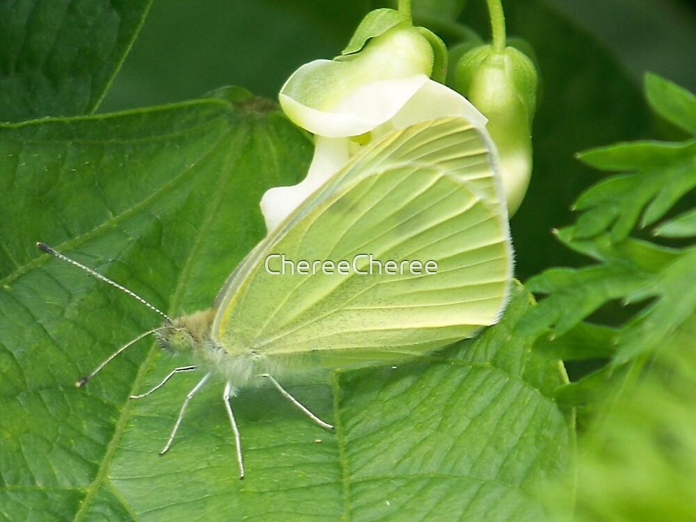 Winged Beauty by ChereeCheree