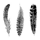 Feather Trio   Three Feathers   Bird Feathers   Vintage Feathers   Black and White   by EclecticAtHeART