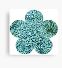 Green Broccoli Florets Canvas Print