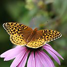 Butterfly Contemplation by Renee Dawson