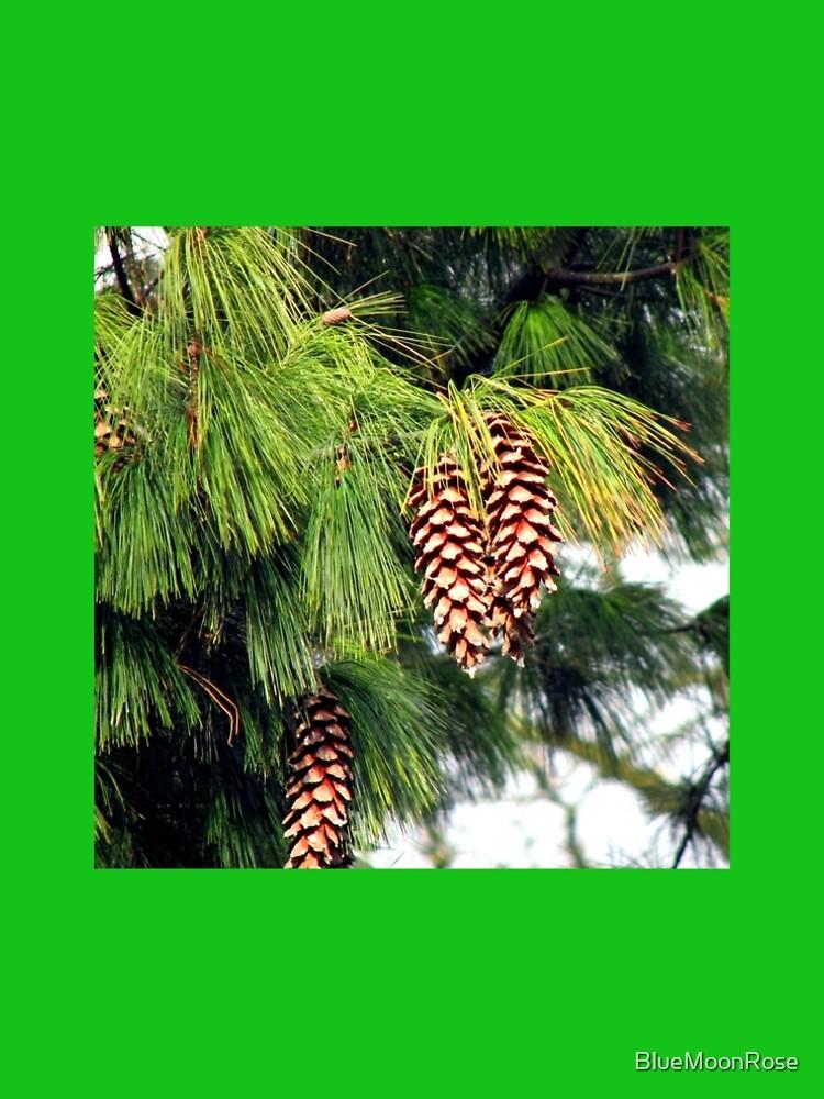 On The Threshold of Winter - Sunlit Pine Cones  von BlueMoonRose