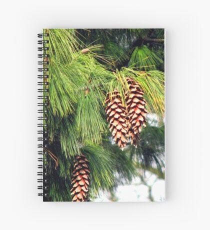 On The Threshold of Winter - Sunlit Pine Cones  Spiralblock
