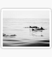 Free Dolphins Sticker