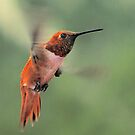 Orange Hummer by Ken  Aitchison