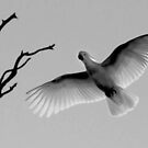 Light Bird by Penny Kittel
