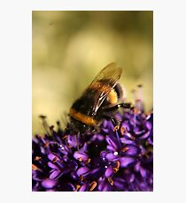 Busy Bee on Purple Flower Photographic Print