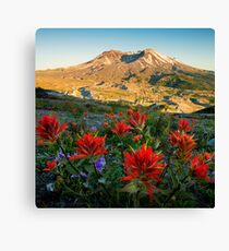 Sunset Paintbrushes at Mount St. Helens Canvas Print