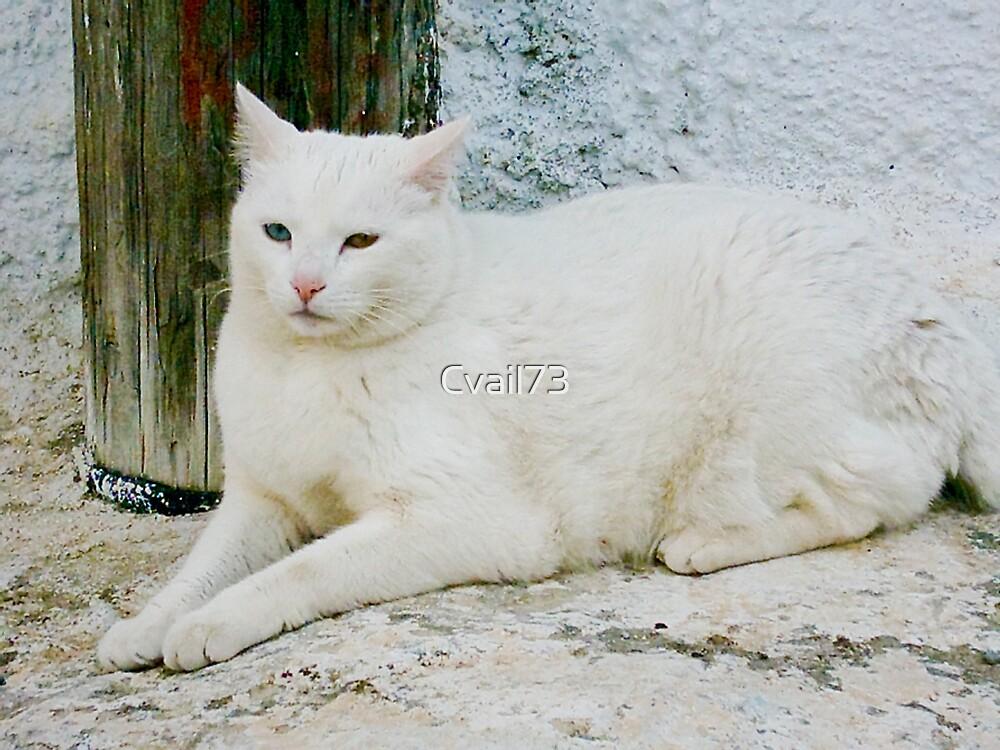 Greek cat by Cvail73