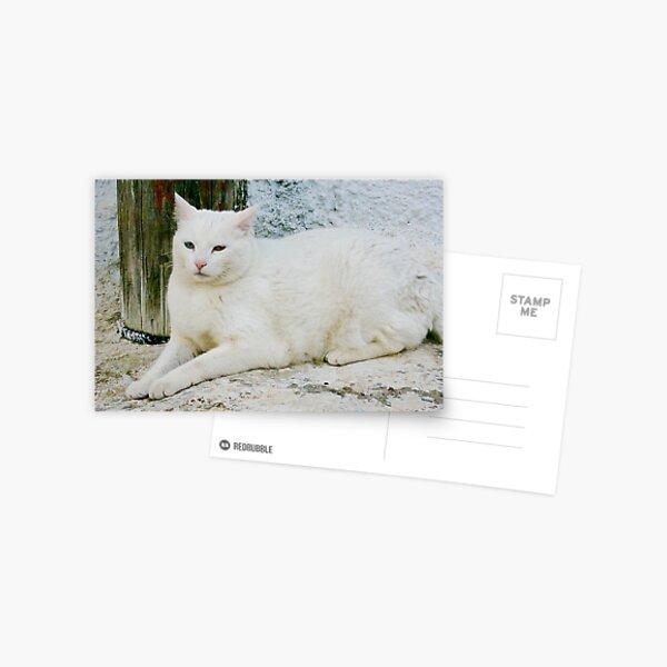 Greek cat Postcard